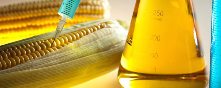 Syngenta Sued by 60,000 Corn Producers - What You Need to Know